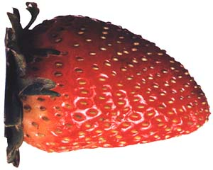the Polish strawberry